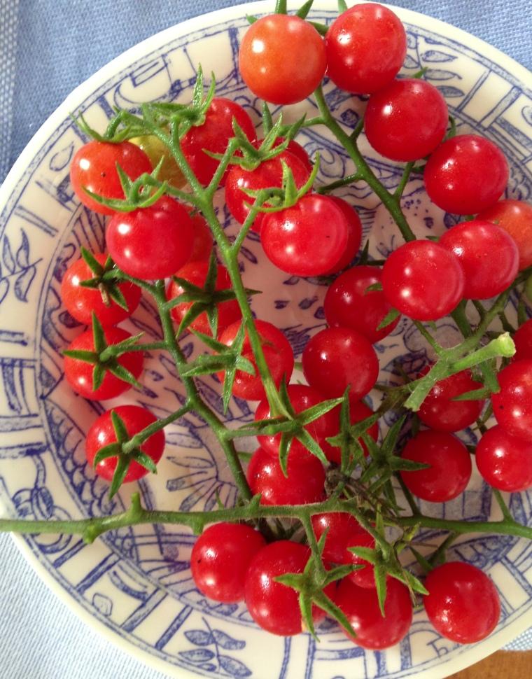 Matt's Wild Cherry heirloom tomato