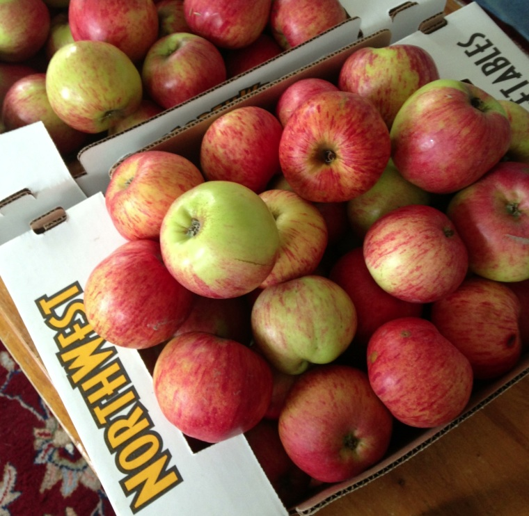 A hefty haul of Gravenstein Apples from a local NW orchard.