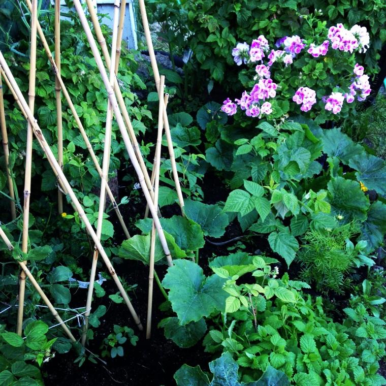 Berries Geraniums Vertical Gardening