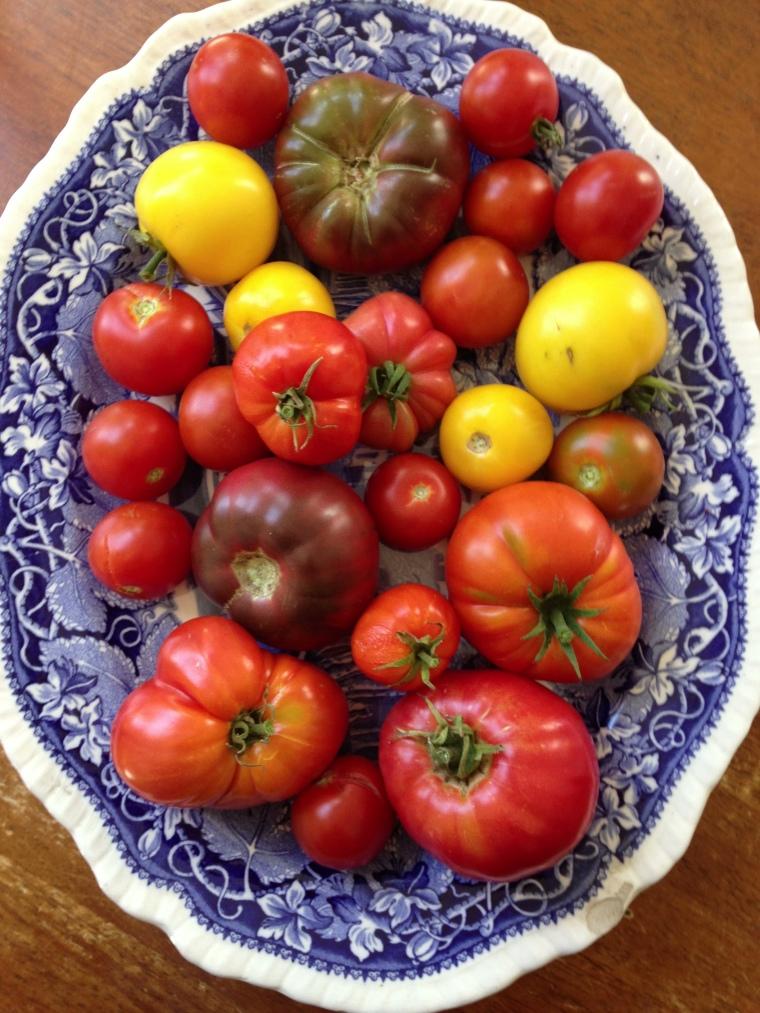 tomatoes 2 2015
